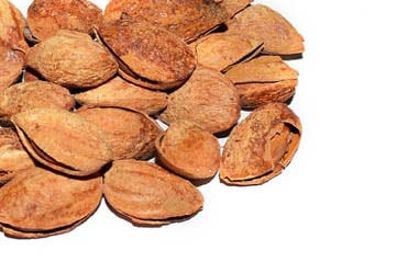 Salted Almonds In-Shell